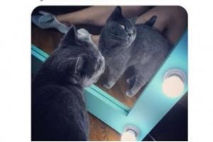 Фото отзыва на зеркало голубого цвета